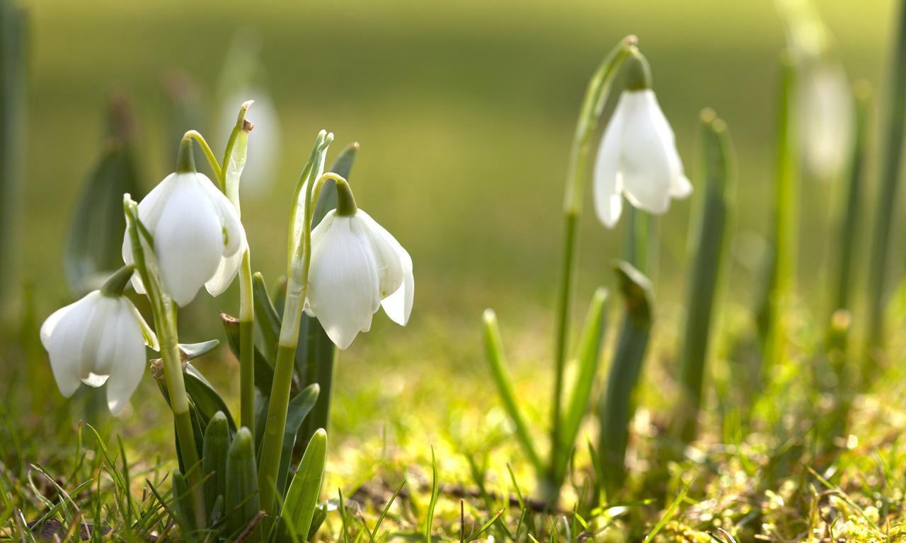 Картинка с природой весна